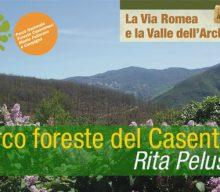 Parco delle Foreste del Casentino | Rita Pelusio